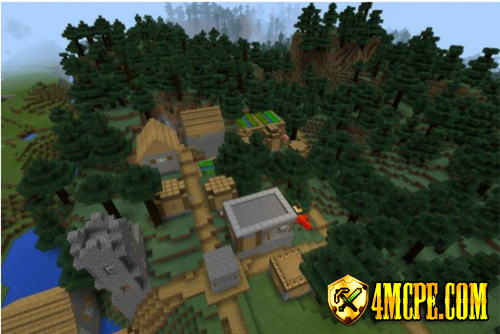 Forest Village Seed